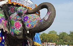 En famille au royaume des animaux et des Maharajas