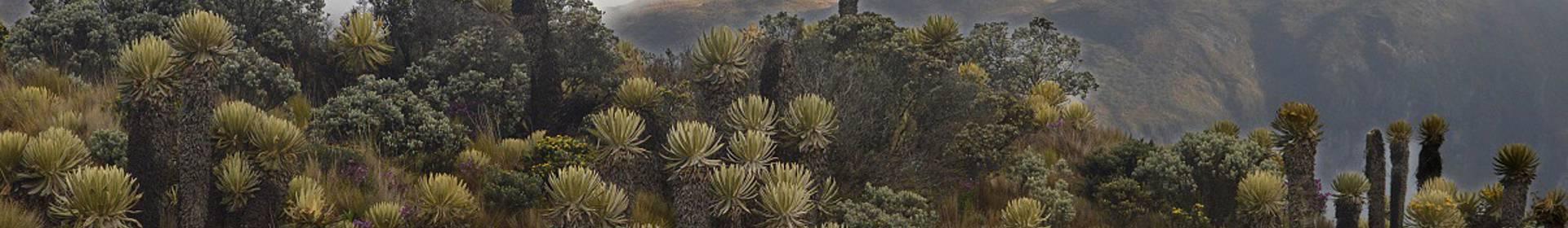 Parc national naturel de Los Nevados