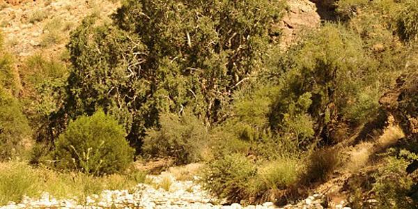 Olive Trail