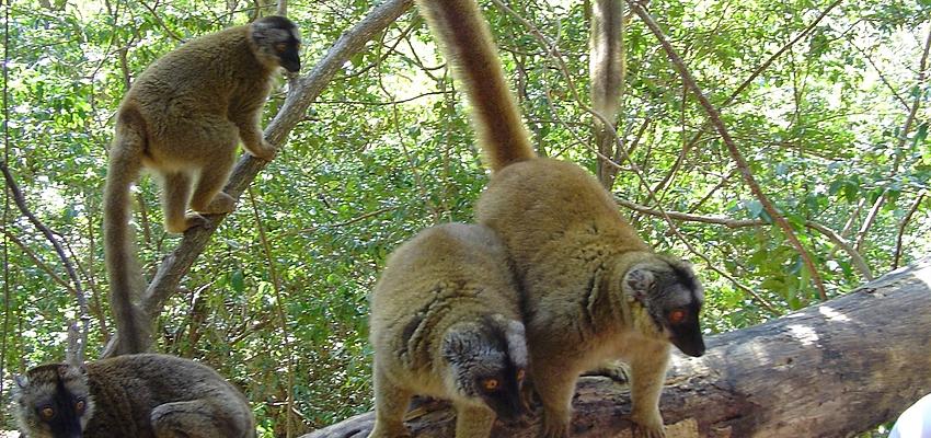 En Mayotte