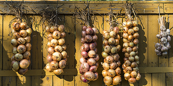 Trenza de cebollas, lago Peipsi