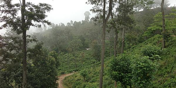 Sulle montagne dello Sri Lanka