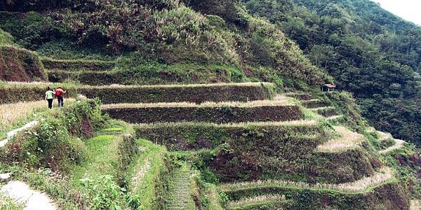 Trek dans les rizières Ifugao