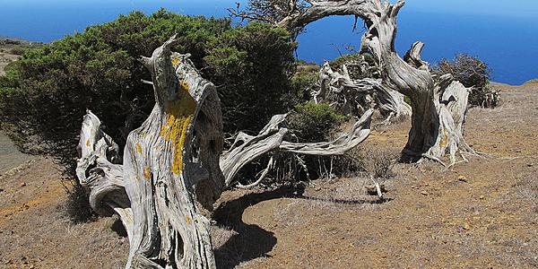 La forêt enchantée à El Hierro