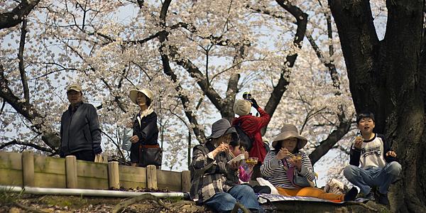 Hanami en Ueno