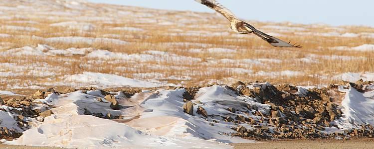 Gobi, rencontres nomades en hiver