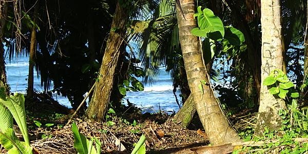 El parque de Cahuita: entre selva y calas