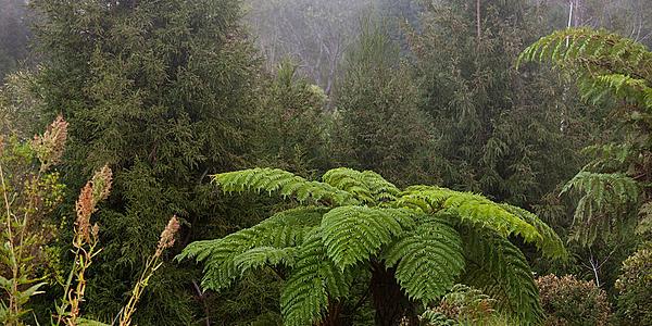 Sentier botanique de Notre-Dame-de-la-Paix