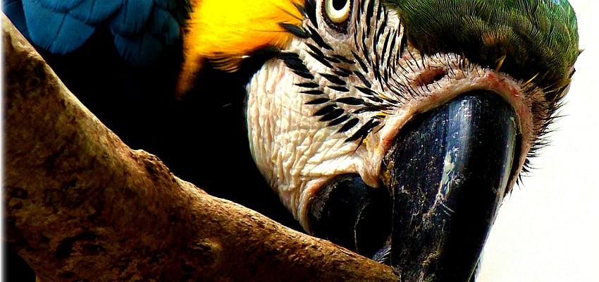 Un guide est indispensable pour l'Amazonie ou le Pantanal