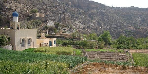 La vegetazione a Jabal Akhdar
