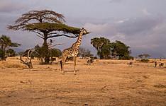 Sud Tanzanie et Zanzibar : l\'Escapade africaine