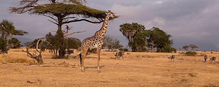 Sud Tanzanie et Zanzibar : l'Escapade africaine