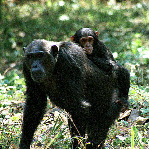 Le Grand Tour de la Tanzanie - Kilimandjaro -