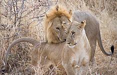 Kenya - Tanzanie, combiné légendaire