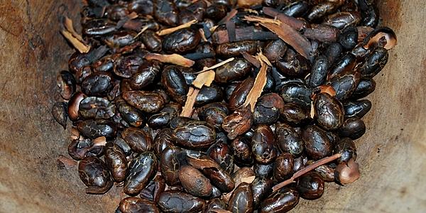 granos de cacao torrefactos