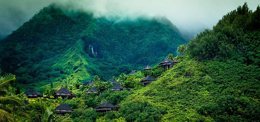 Jungle de Tahiti