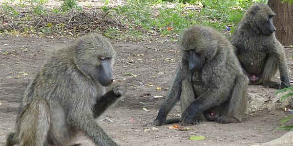 Un grupo de monos