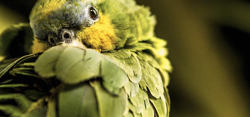 Le paradis pour les amoureux des oiseaux