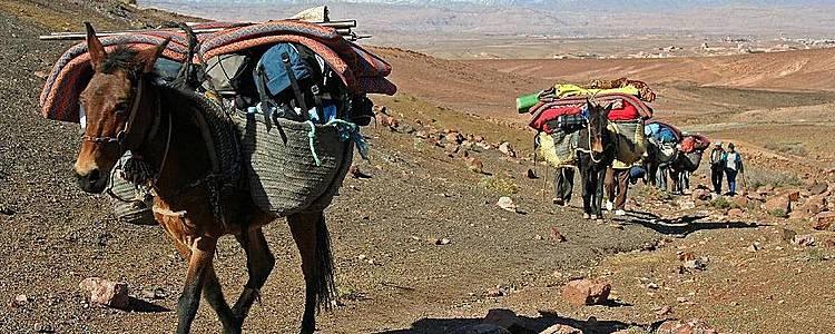 Durch die wilden Sarho - Berge