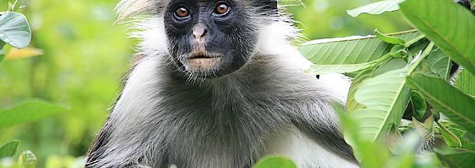 Circuito Zanzibar : Qué ver en jozani chakwa viaje y circuitos evaneos