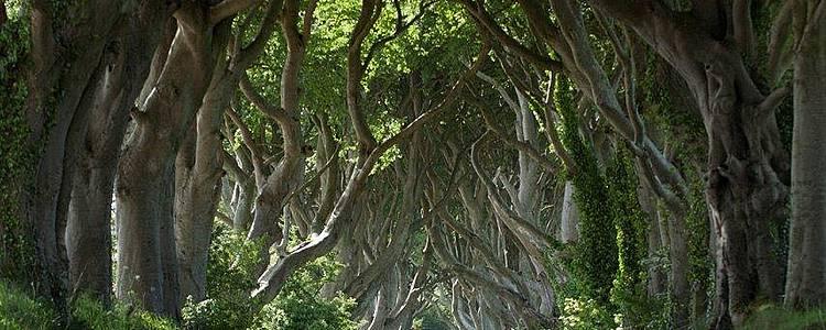 Sur les traces de Game of Thrones - Dublin et l'Irlande du Nord
