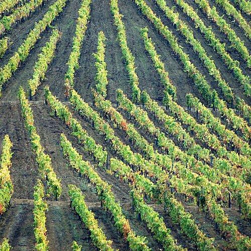 La découverte des vins - Porto - sur-mesure - circuit - evaneos