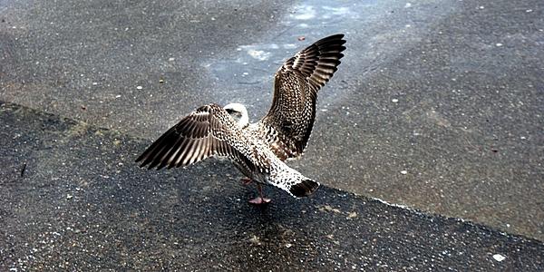 Observación de aves en Polonia