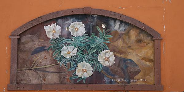 Une des fresques de Montresta