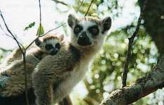 Voyage au pays des lémuriens en famille