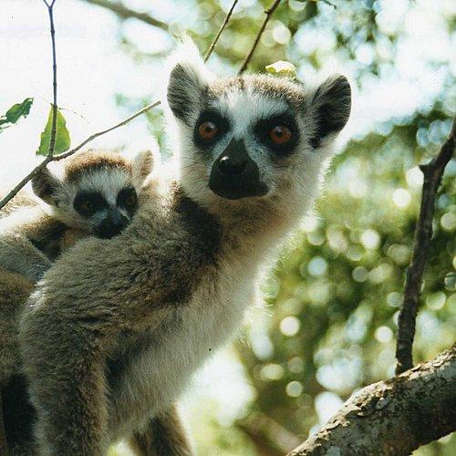 Voyage au pays des lémuriens en famille - Antananarivo -