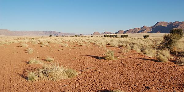 Dans le Parc national de Namib Naukluft
