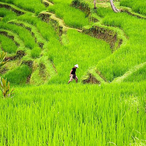 De Java à Bali: paysages de rizières , balades et rencontres locales -