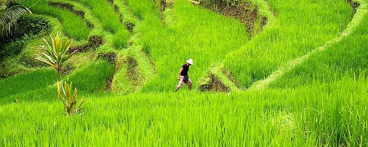 De Java à Bali: paysages de rizières , balades et rencontres locales