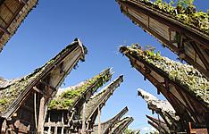 Grande découverte de Sulawesi du pays Toraja aux îles Toggian