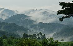 Ouganda-Rwanda, pays des volcans et des primates-charme