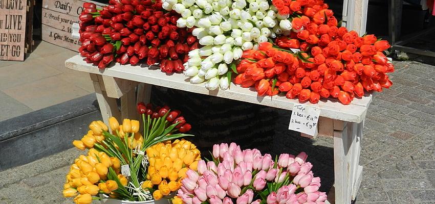 Un détour par le marché aux fleurs