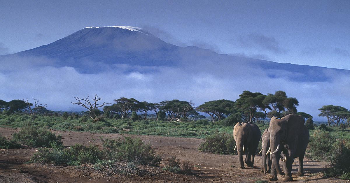 Voyage avec des animaux : Kenya-Tanzanie, safari et Zanzibar