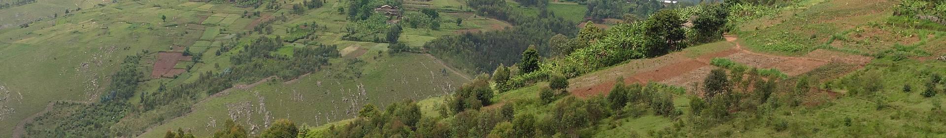 Nyakazu