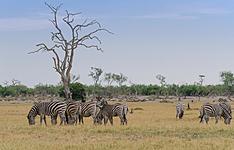 Le Botswana en liberté