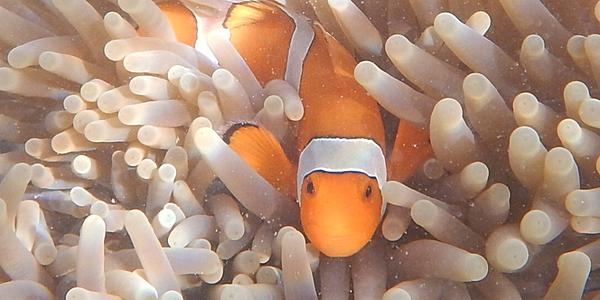 Rencontre sous-marine
