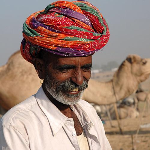 La foire aux bestiaux de Nagaur -