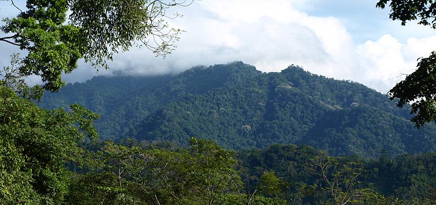 Selva de Honduras