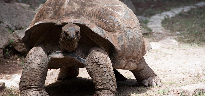 Rencontrez les tortues