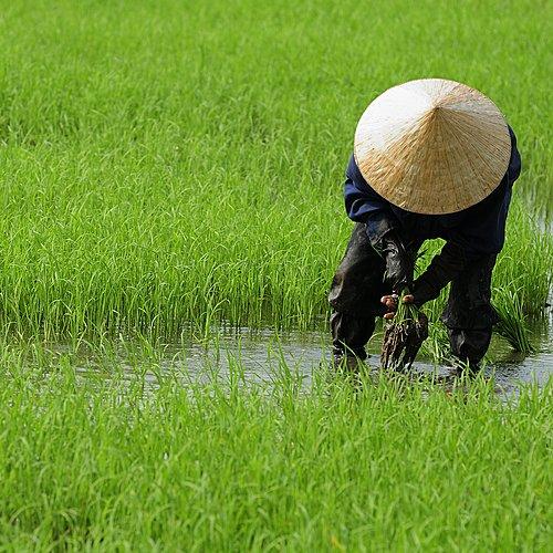 Du Sud au Nord, sites incontournables - Hô Chi Minh Ville -