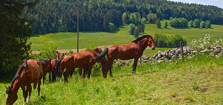 Canton du Jura suisse