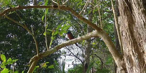 Végétation à Trinidad et Tobago