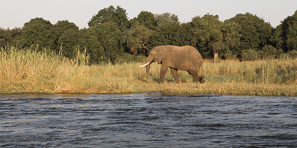 Eléphant au Mana Pools National Park