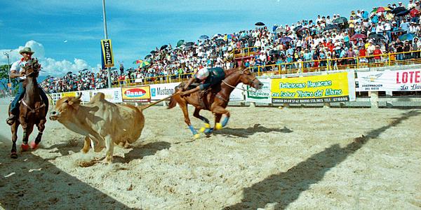Espectáculo de coleo en las arenas de Villavicencio