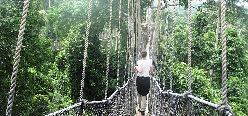 Canopy Walk à Kakoum