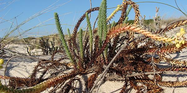 Sur les dunes de Sao Jacinto